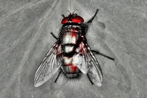 Fliege im Silberglanz mit  Flecken