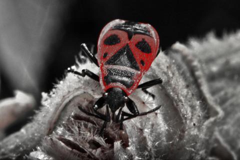 Insekt auf silberfarbenem Blatt
