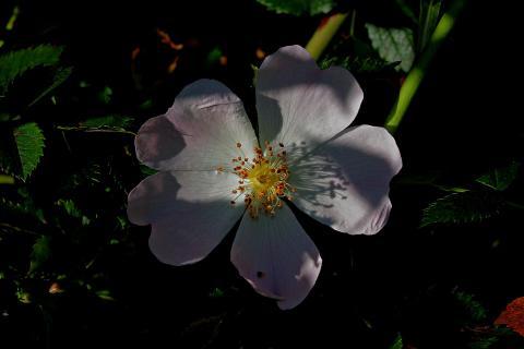 Blüte in der Abendstimmung