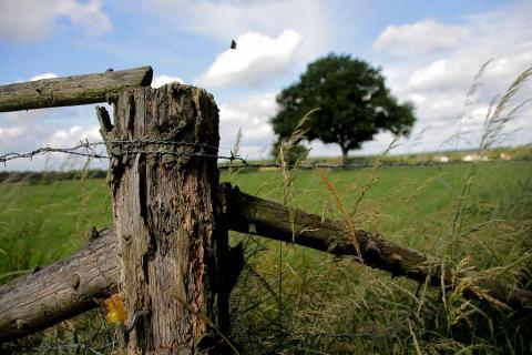 alter Zaun auf der Kuhweise