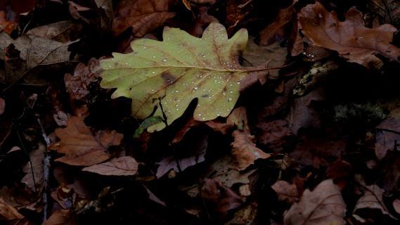 nasses Blatt auf dem Waldboden