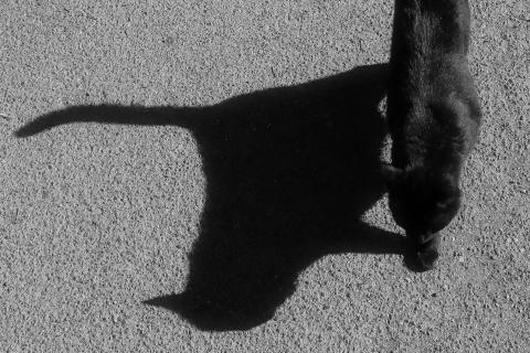 Schwarze Katze mit schwarzem Schatten.