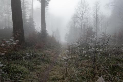 39_Herbst-im-Nebel_Elisabeth_Weidmann