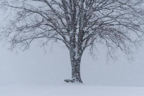 52_Winterbild_Elisabeth_Weidmann