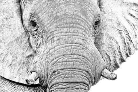 Nachts sind alle Elefanten grau - Tagsüber auch