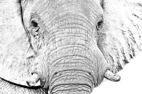 High Key Elefant