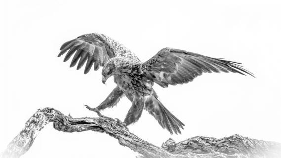 Der Adler ist gelandet