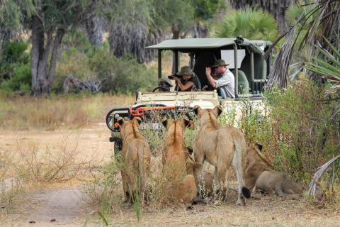 Safari verkehrt