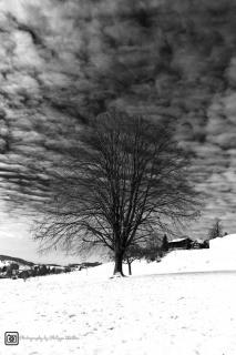 Schwarz / Weiss im Winter
