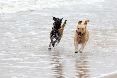 Zwei Hunde_am_Meer