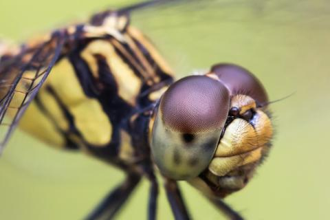 Libellenausschnitt