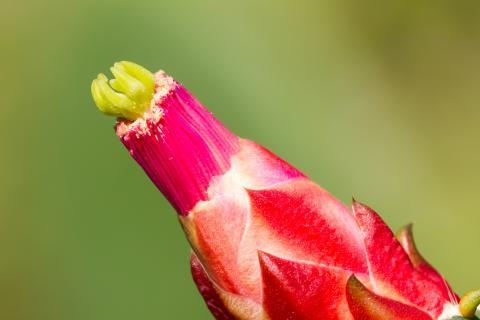 Ausschnitt der Kaktusbluete