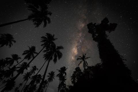 Milchstrasse über Palmen