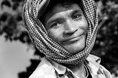 Reisernte Kambodscha