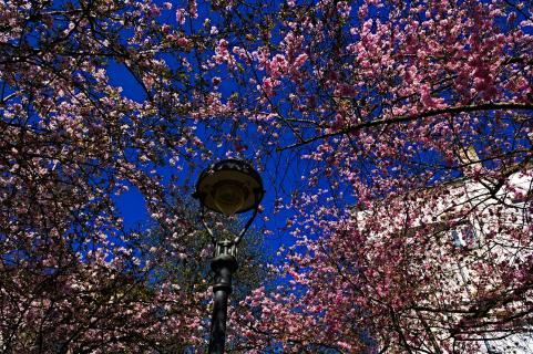 07 Fangen Sie Den-Frühling-Ein!_Thorsten_Meisner