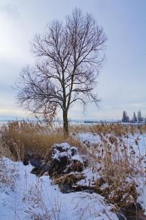 52 Fotografieren Sie Ein-Winterbild!_Thorsten_Meisner