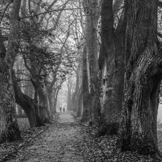 Spaziergang im Nebel