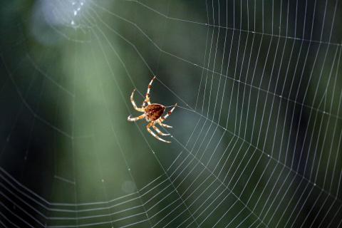 Spinne und ihr Netz