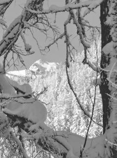 Winterlicher Durchblick...