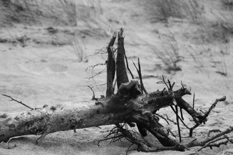 Treibholz am Ostseestrand