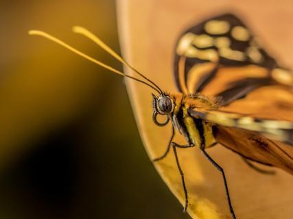 Schmetterling . . . Du kleines Ding :-)