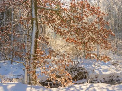 52_winterbild_juergen_corde.jpg