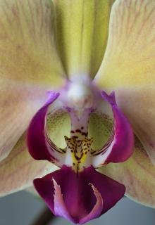 Orchidee Macro Stacking