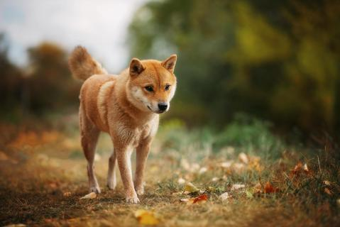 12_Fotografieren Sie ein Haustier!_Iva_Busic