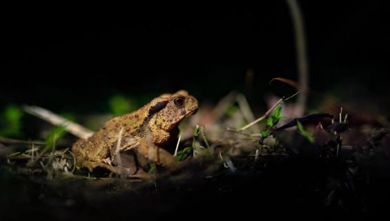 Frosch in der Nacht