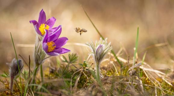 Bienenangriff