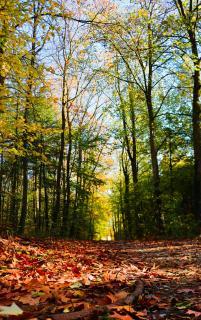 Herbstaussichten