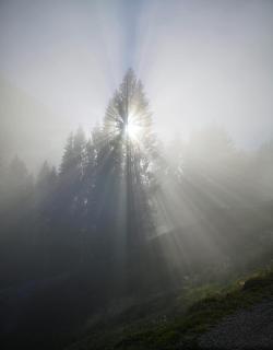 39 Herbst im Nebel_Gustav_Sieber