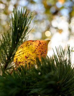 Eingerahmtes Herbstblatt im Bokehlicht