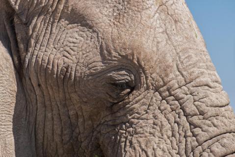 Gerhard Fingerhuth Elefant Namibia 001