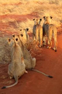 Löwengruppe