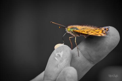 Schmetterlingsfütterung