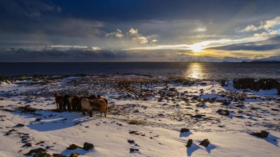 Sundowning Horses