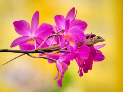 flora meets fauna