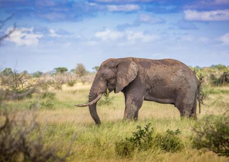 Elefant im Kruger-Park