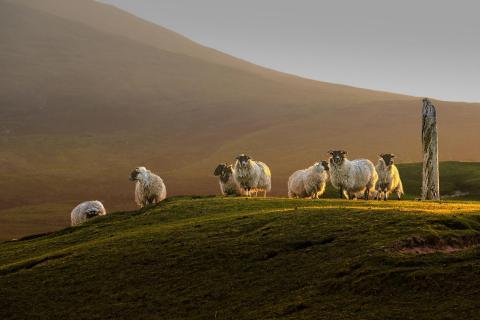 Meine Freunde aus den Highlands