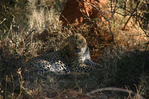 Wildlife Namibia (3)