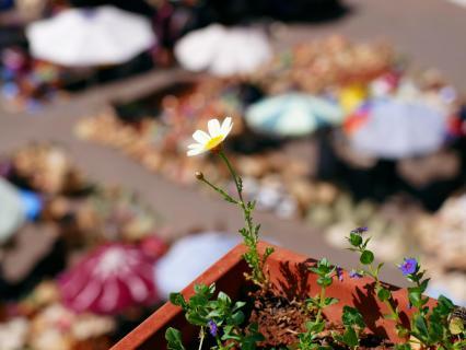 Marrakech Flowers