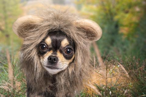 Wenn ich groß bin, möchte ich ein Löwe sein