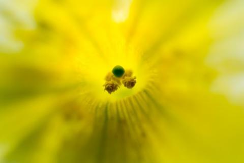 Markro Blume
