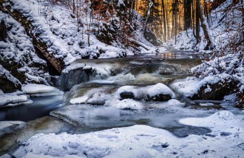 Dresdner Heide im Winter