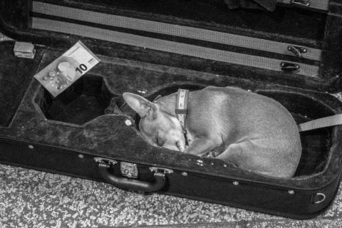 Hund im Koffer