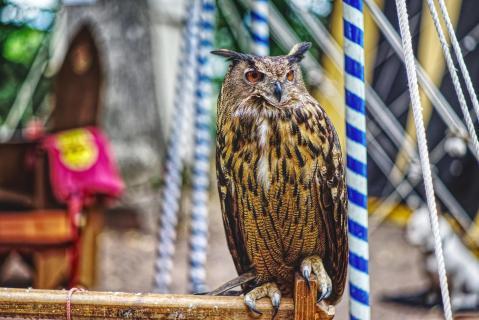 Uhu auf Mittelalterfest