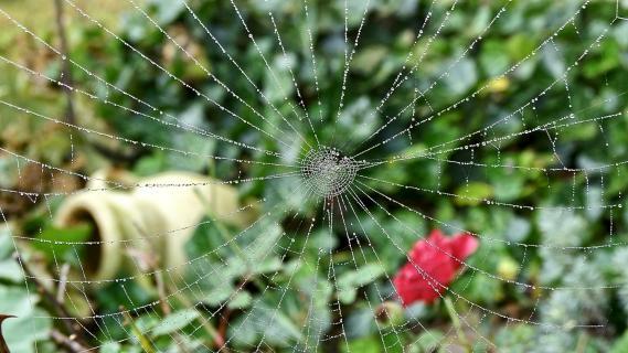 Blick durch das Spinnennetz