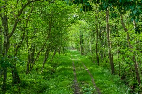 the green way