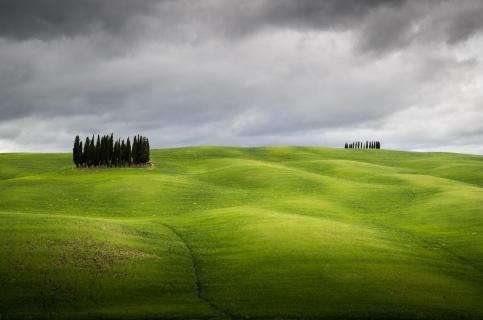 Leuchtend grüne Felder in der Toskana